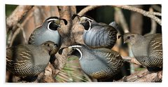 California Quail Covey  Beach Sheet