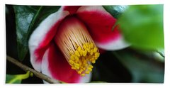 Camellia Bloom And Leaves Beach Towel