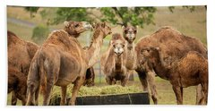 Beach Towel featuring the photograph Camels Out Amongst Nature by Rob D Imagery
