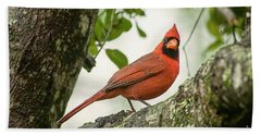 Cardinal Pose Beach Towel