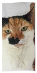 Cat Lovers Bella Beach Sheet
