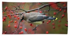Cedar Waxwing 102206 Beach Sheet