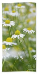 Chamomile Flowers Beach Towel