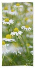 Chamomile Flowers Beach Sheet