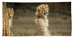 Cheetah Cubs And Rain 0168 Beach Towel