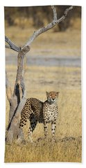 Beach Towel featuring the photograph Cheetah by John Rodrigues