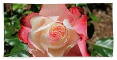 Beach Towel featuring the photograph Cherry Parfait Rose by Dawn Richards