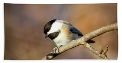 Beach Towel featuring the photograph Chickadee by Sue Collura