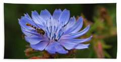 Chicory Flower With A Hoverfly Beach Towel