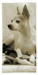 Chihuahua Chiqui  Portrait  Beach Towel