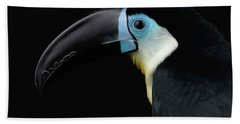Beach Towel featuring the photograph Close-up Channel-billed Toucan, Ramphastos Vitellinus, Isolated On Black by Sergey Taran