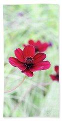 Cosmos Black Magic Flower Beach Sheet
