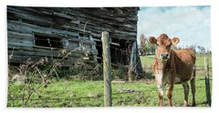 Beach Towel featuring the photograph Cow By The Old Barn, Earlville Ny by Gary Heller