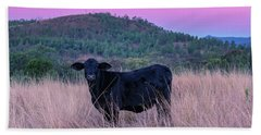 Cow Outside In The Paddock Beach Towel