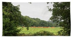 Cows In The Pasture Beach Towel
