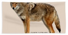Coyote Ultimate Adaptor Beach Towel