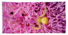 Crab Spider Beach Sheet