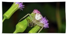Crab Spider With Bee Beach Sheet