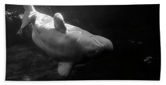 Curious Beluga Beach Towel