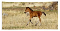 Cute Wild Bay Foal Galloping Across A Field Beach Sheet