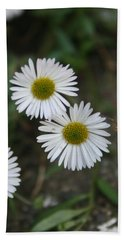 Daisy Daisy And Your White Petal Minding The Sun Core Beach Towel