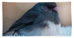 Dark-eyed Junco Beach Towel