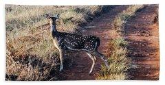 Deer Posing Beach Towel