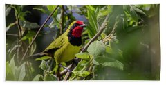 Doherty's Bushshrike Beach Towel