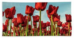 Beach Towel featuring the photograph Dutch Red Tulip Field. by Anjo Ten Kate