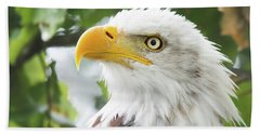 Bald Eagle Perched In A Tree Beach Towel