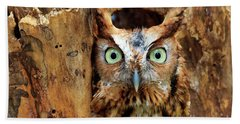 Eastern Screech Owl Perched In A Hole In A Tree Beach Towel