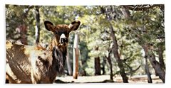 Elk In The Canyon 005 Beach Towel