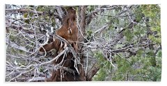 Elk In The Canyon 006 Beach Towel