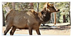 Elk In The Canyons 004 Beach Towel
