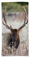 Beach Towel featuring the photograph Elk Portrait by Nathan Bush