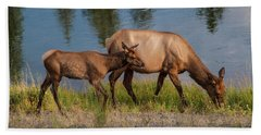 Beach Towel featuring the photograph  Elks Grazing On The Madison River, Wy by Lon Dittrick