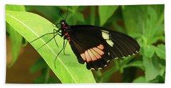 Eumaeus Atala Butterfly Beach Towel