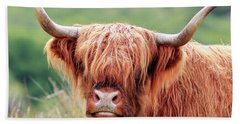 Face-to-face With A Highland Cow Beach Towel