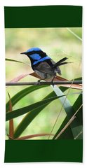 Fairy-wren 1 Beach Sheet
