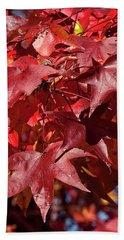 Fall Sweetgum Leaves Df005 Beach Towel