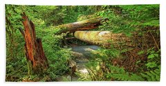 Fallen Trees In The Hoh Rain Forest Beach Towel