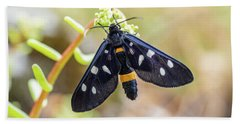 Fegea - Amata Phegea -black Insect With White Spots And Yellow Details Beach Towel