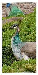 Female Peafowl At The Gardens Of Cecilio Rodriguez In Madrid, Spain Beach Sheet