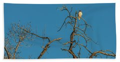 Beach Towel featuring the photograph Ferrunginous Hawk In Tree by Jon Burch Photography