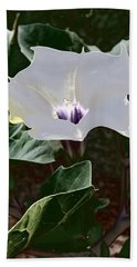 Beach Towel featuring the photograph Flower And Fly by Judy Kennedy