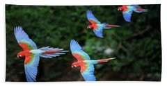 Four Red-and-green Macaws In Flight, Mato Grosso Do Sul, Brazil Beach Towel