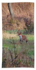 Fox In The Wild Beach Sheet