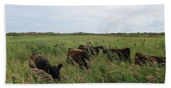 Galloway Cows On Texel North Holland Beach Towel