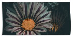 Gazania Gaze Beach Towel