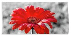 Gerbera Daisy Color Splash Beach Towel